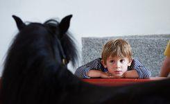 rencontre avec un poney au haras hennebont