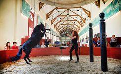 le cheval au haras hennebont