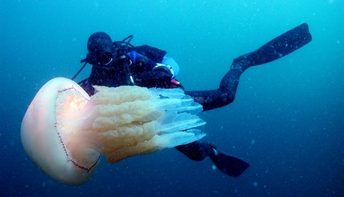 Plongée poissons Lorient