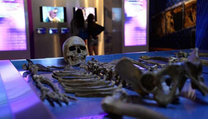 exposition_préhistoire(s) l'enquête
