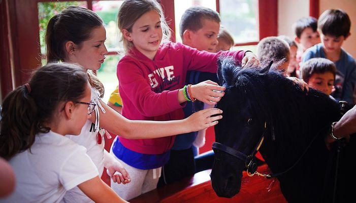 enfant caressant un poney au haras hennebont